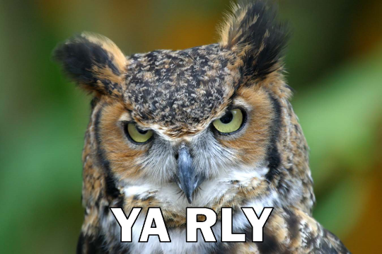 http://www.o--rly.com/owl_yarly.png